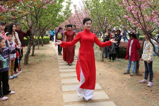 鹤壁:樱花树下弹古筝