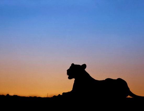 日落时分非洲草原动物唯美剪影