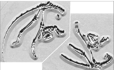 我科学家发现最古老灵长类动物骨架化石