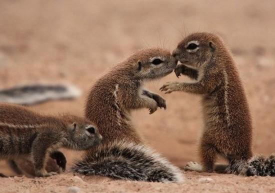 小松鼠是不是国家保护动物