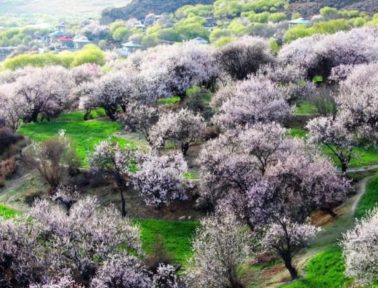 桃花的基本结构与功能